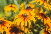 Yellow beautiful summer flowers. Yellow flower petals. Natural flowers