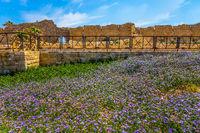 Lilac wildflowers on the seashore