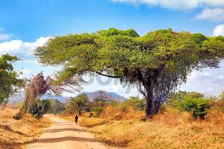 Auf den Straßen von Malawi | On the streets of Malawi