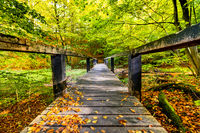 Long wooden bridge in a forest with green trees