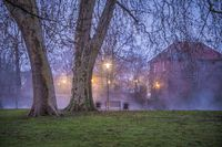 Old plane trees in the fog of dusk.