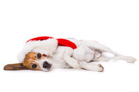 Beagle dog with christmas hat lying exhausted on the side isolated on white background