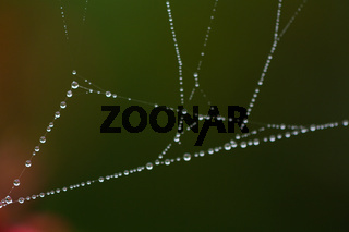 Thin web with dew in the morning