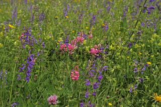 Blumenwiese auf der Schwaebischen Alb