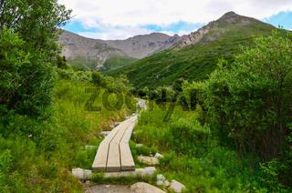 Boardwalk on Svagae river loop hike trail with mountains in the background. Denali Detional Park and Preserve, Alaska