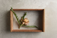 A small dried artichoke in a shadow box on a gray tile
