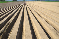 Agriculture, 'furrow cultivation', Germany