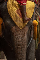 Close-up of mahout foot on elephant head