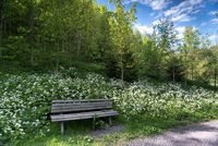 wooden bench at idyllic and silent place