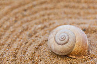 Sea shells with sand as background and holiday concept