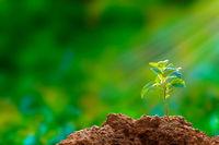 New hope: tree seedling