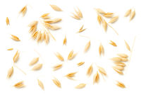 Oat Plants Isolated On White Background