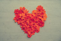Heart shape orange cosmos flowers