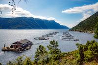 Farm salmon fishing in Norway