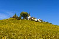 Herbst im Weinanbaugebiet La Côte
