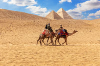 Egyptian men on camels in the sands of Giza near the Pyramids