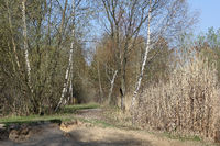 Path at lakeside of the small Biotopsee lake at the Arkenberge hills in Berlin