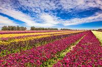 Wonderful May day