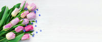 Ostern, Frühling, Tulpen, auf Holz, Banner, Header, Headline, Panorama, Textraum