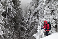 Hiker makes his way on snowy slope in snow-covered forest