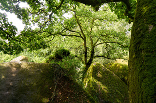 Wald mit Steinen im Sommer in Huelgoat