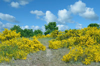 on Schafberg Hill in Bioreserve South-East Ruegen,baltic Sea,Mecklenburg western Pomerania,Germany