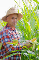Middle age caucasian Farmer hold fresh organic corn cobs in his hands somewhere in Ukraine. Harvest care concept