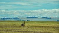 Mountain plateau in the area Zavkhan River