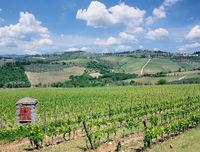 Vineyard Landscape in Chianti region,Tuscany,Italy