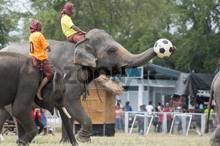 THAILAND ISAN SURIN ELEPHANT SOCCER