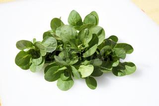 Feldsalat, Valerianella, locusta