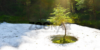 A sensitive plant in pool of light