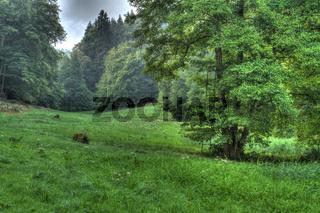 Waldwiese mit Hochsitz