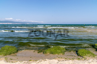Algal, Algae blooms in Sunny Beach on the Black Sea coast of Bulgaria