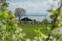 Landscape Fraueninsel Chiemsee