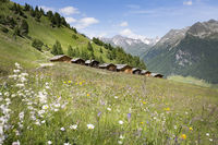 Lobiser Schupfen sheds in the Aurina Valley in South Tyrol, Italy