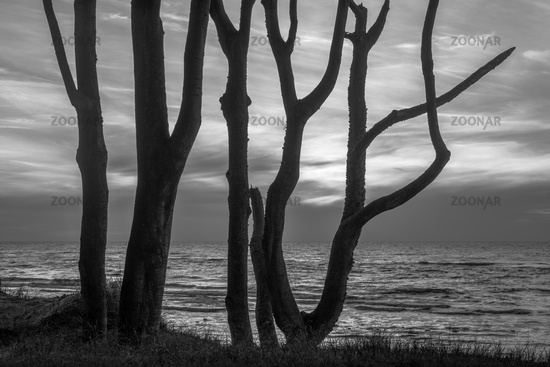 Trees at the Darsser west beach