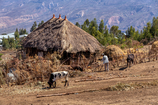 Ethiopian farmer in the countryside