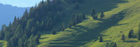 Trees and hills in Obermutten, Switzerland.