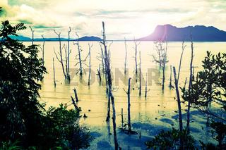 Abgestorbene Bäume an einem Strand von Sarawak auf Borneo im Abendlicht