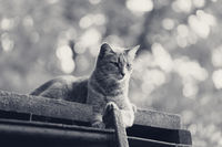Gray cat resting on old wooden roof