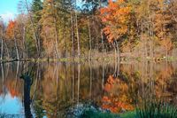 lake in the forest, autumn forest and lake