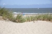 marram grass, bent grass or beachgrass on the sandy beach of Cadzand