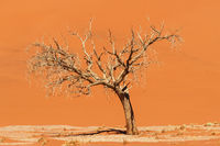 Dune and dead acacia tree in the Namib desert, Sossusvlei, Namibia, Africa.