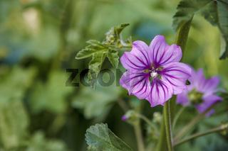 beautiful garden flower