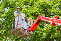 Man fighting oak procession caterpillars in aerial platform