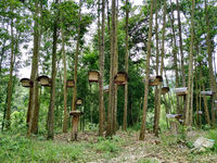 Bee hives in forest.