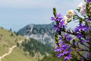 Flowers on Kampenwand