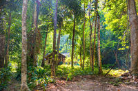 View of house among tropical jungle forest