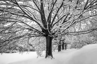 Winterliche Landschaft des Hofer Buegerparkes